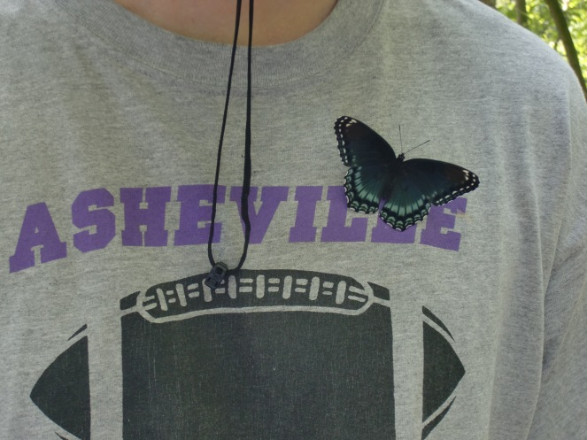 The Red-Spotted Purple (Limenitis arthemis astyanax) that perched on my husband's t-shirt (the Asheville Assault are (were?) a women's professional football team in Asheville, NC).