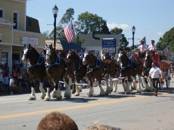 Two things I love: Clydesdales and parades. Even better: Clydesdales in a parade.