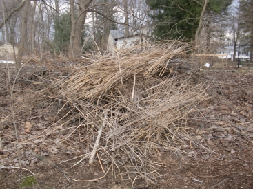 2 pm: Cleaning up the yard and adding to the brush pile. We assume it will eventually compost.
