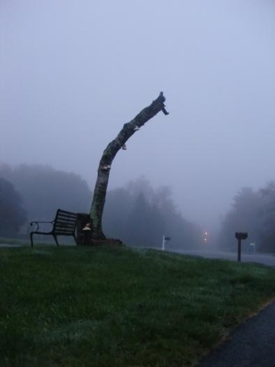 Morning Walk (and dead birch tree)