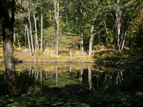 Black Pond near the sanctuary border.
