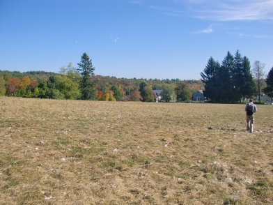 Fall colors across the mown meadow.