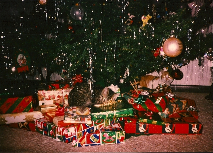 3 months old, Christmas 1996 (with ginger cat Henry in the background)
