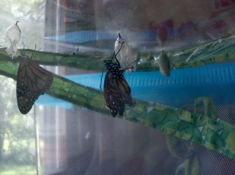 Newly emerged.