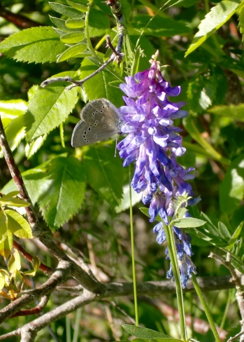 Flower and upside-down butterfly in Cavendish