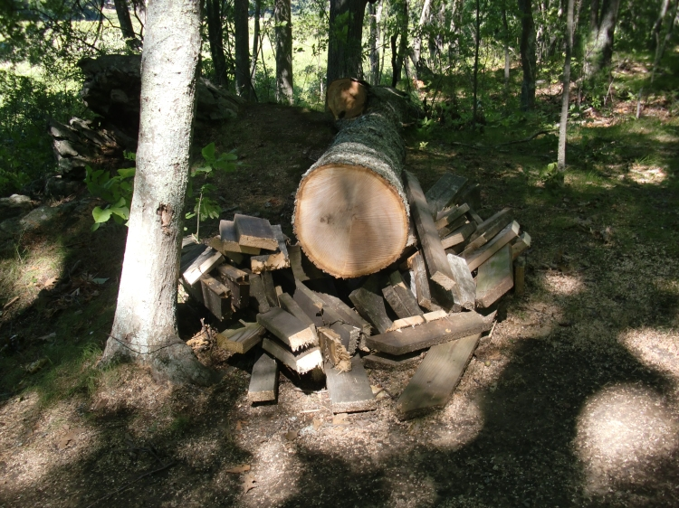 What's left of the picnic table and the tree that fell on it.